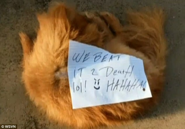 Pomeranian dog beaten to death with note