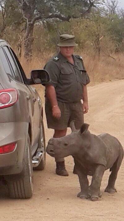 Orphaned baby rhino