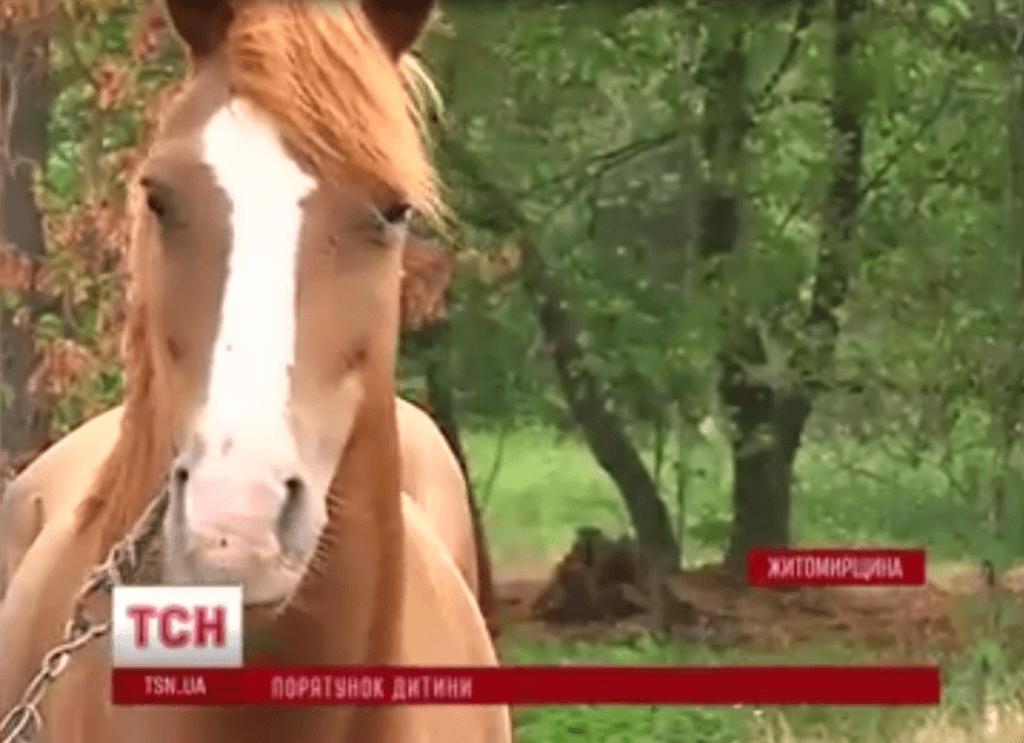 Six year old Ukrainian boy has penis bitten off horse