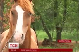Six year old Ukrainian boy has penis bitten off by mean horse