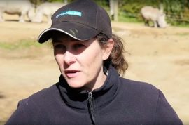 Samantha Kudeweh, NZ zookeper mauled to death. Sumatran tiger spared.