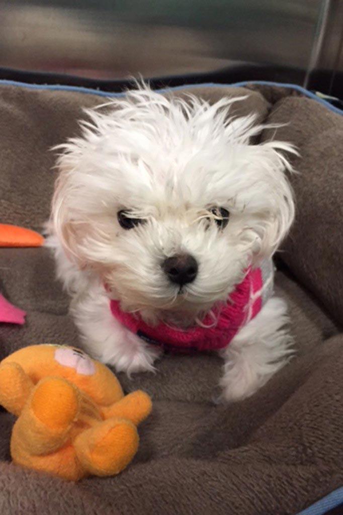 Alsu Ivanchenko puppy puppy guilty