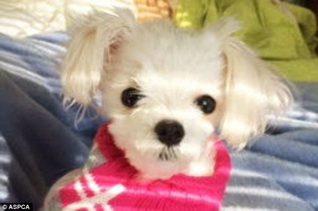 Alsu Ivanchenko puppy guilty