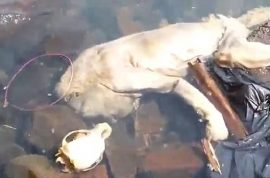 Video: Chupacabra, sea vampire with human hands washes up in Paraguay