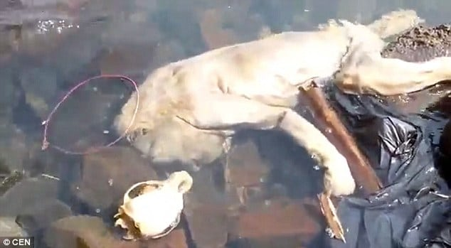 Chupacabra, sea vampire with human hands washes up in Paraguay
