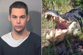 Matthew Riggins, idiot burglar eaten by alligator while hiding from cops