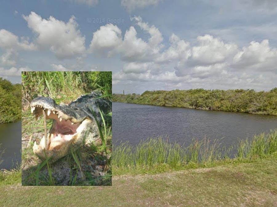 Matthew Riggins burglar eaten by alligator1