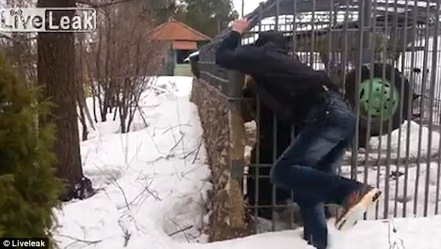 Russian man hand ripped off by caged bear