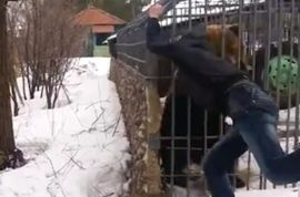 Video: Idiot Russian has hand ripped off by caged bear after ignoring warning