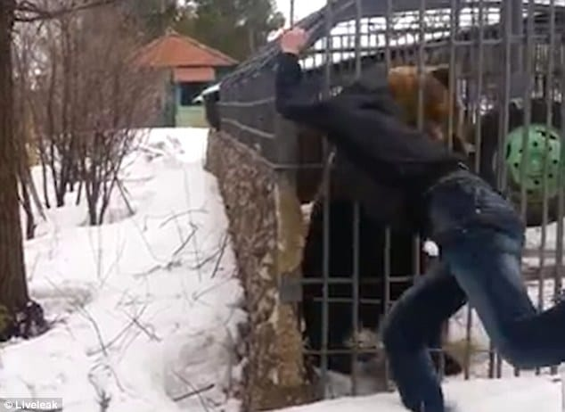 Russian hand ripped off by caged bear