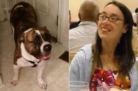 Did ex owners set her up? Suzanne Story mauled to death by adopted pit bull