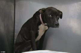 Abandoned Brooklyn dog chained to tree found frozen to the ground