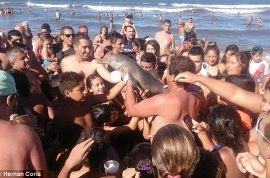 Argentina dolphin dies after carried on beach for selfies