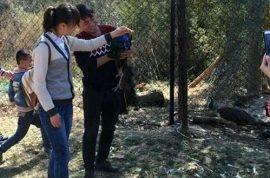 Peacocks die after idiot crowd Chinese zoo selfie