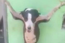 NSFW: Video of dog crucified, torturers wanted.