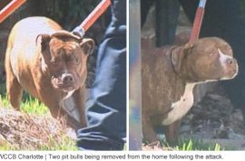 Who's to blame? Bessie Flowers, 86 mauled to death by daughter's two pit bulls
