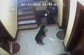 Video: NYPD cop shoots Yvonne Rosado Bronx family dog dead