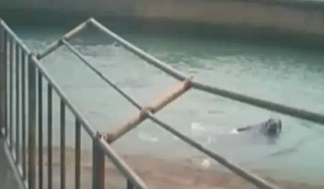 Chinese walrus drowns man taking selfie