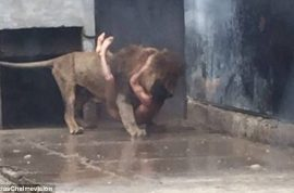 Photos: Man jumps into Chilean zoo lion enclosure in suicide death wish
