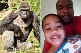 Isiah Dickerson photos: Mommy I want to swim with Harambe the gorilla