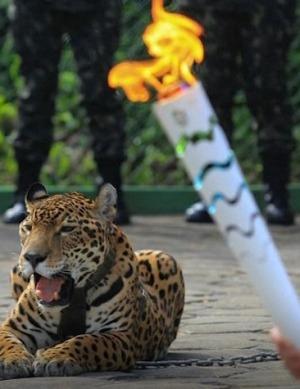 Brazil army Olympic mascot jaguar shot dead