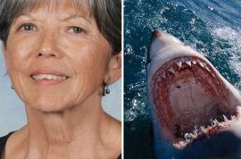 'Bigger than a boat' Doreen Collyer killed in great white shark attack off West Australia