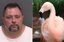 Why did Joseph Anthony Corrao slam Pinky the flamingo to her death?