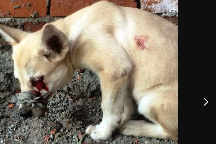 Dog Kills Cat Liveleak
