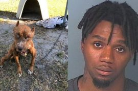Deandre Goodson: How I chained up my pitbull dog who then ate her own puppies