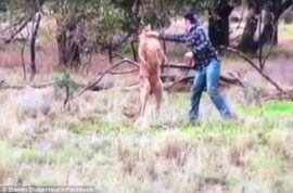 'Fair dinkum' Man punches kangaroo in the face to save dog being strangled