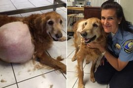 Sherri Haughton: Why I abandoned my pet dog with 42 pound tumor