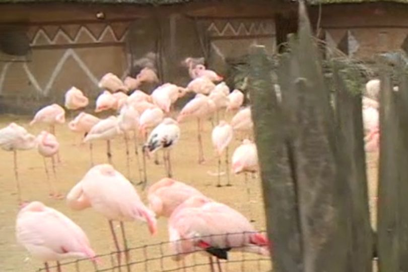 Pink flamingo kicked to death Czech Jihlava zoo