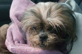 Terrence J Clark: Why I shoved my mom's Shih Tzu in a trash compactor and killed it.