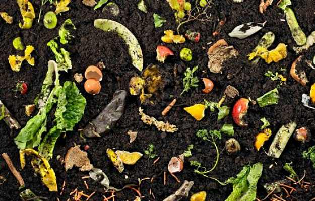 worm composting your garden