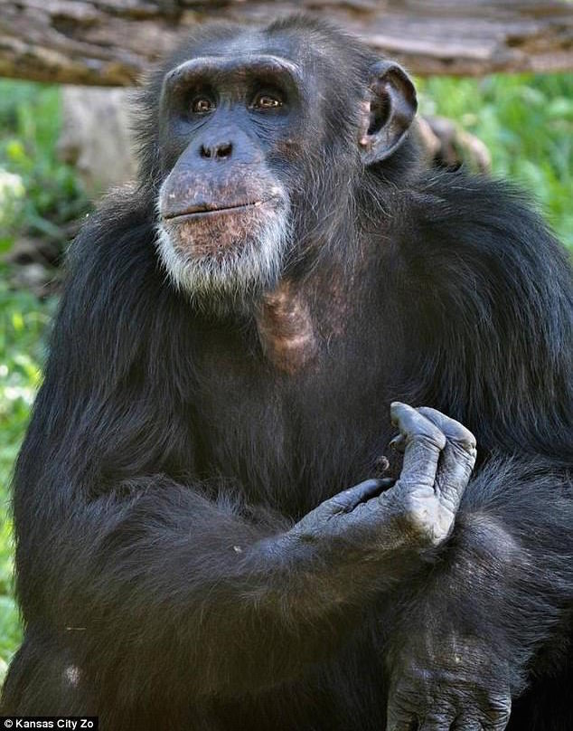 Kansas City zoo chimp beaten to death