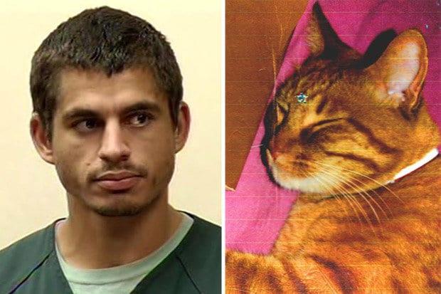 San Jose Serial Cat Killer