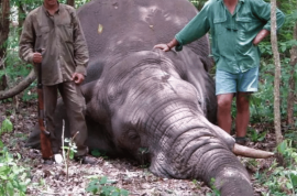 Internet cheers: Jose Monzalvez Argentinian hunter killed by charging elephant (before getting off shot)