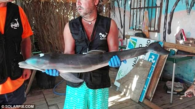 Spanish baby dolphin dies selfies.