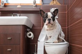 Tips To Bring A New Dog Into Your Home