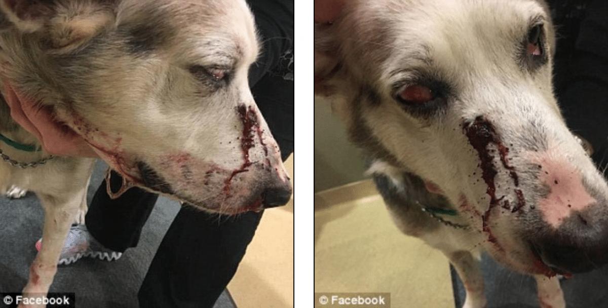Anthony Holmes Pottsville man arrested shooting barking dog