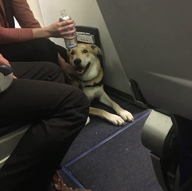 Southwest Airlines emotional support dog