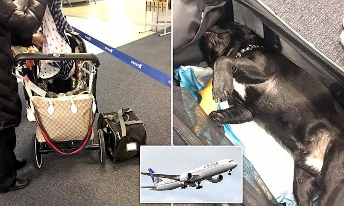 Dog dies after United Airlines flight attendant forces owner to store it overhead bin.