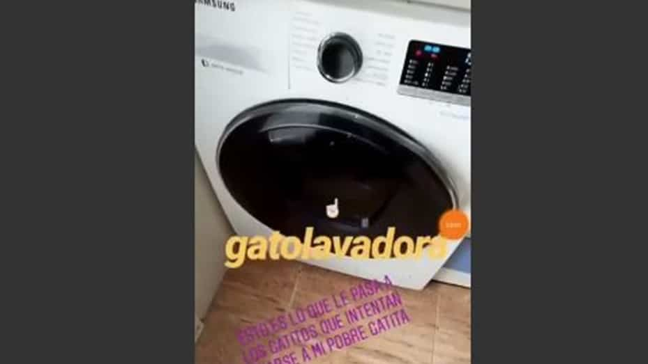 Eva María Vilchez Maldonado Cat Washing Machine video