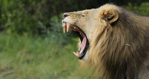 Sibuya Game Reserve poachers mauled