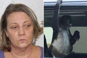 Woman arrested after pet spider monkey & YouTube star attacks Home Depot store workers