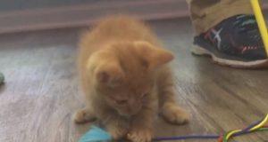 South Carolina teens try drowning kitten in snapchat video