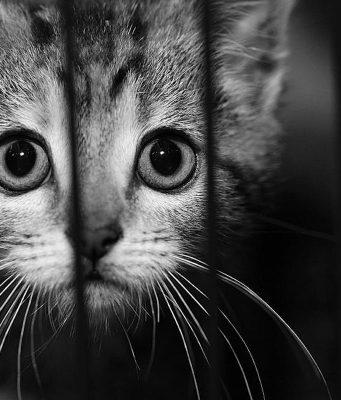 Spencer County Animal Shelter euthanasia investigation.