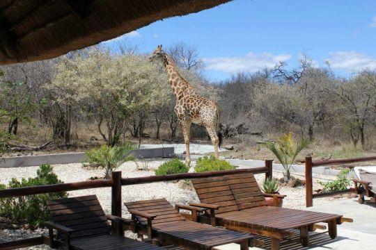 Blyde Wildlife Estate giraffe attack