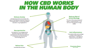 cbd oil works