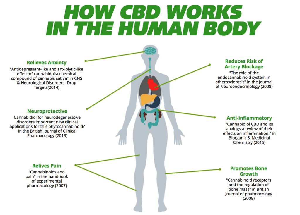 How CBD works,
